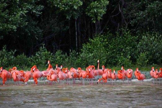 Flamingos Full Size 4
